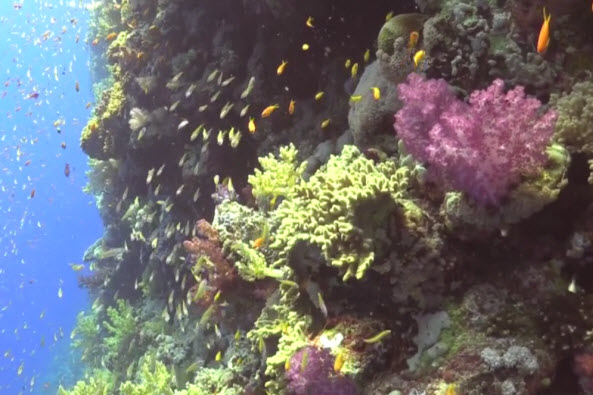 Natural History of Red Sea Coral 3.jpg