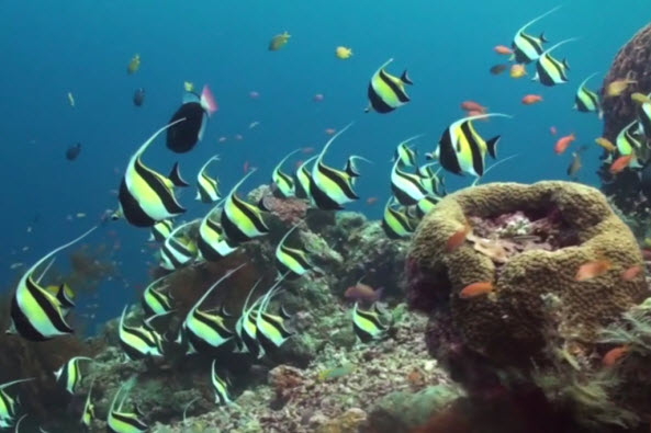 Red Sea Fish ID - How Are Fish Classified