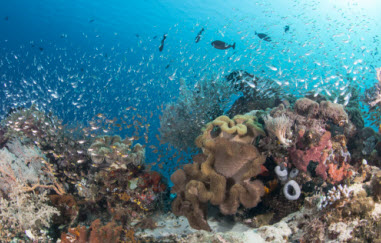 Marine Science Education Explorer Series