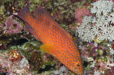 Updates from the field – Twilight Reefs of Pakin Atoll