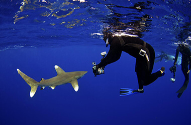 Shark Research off the Coast of Japan