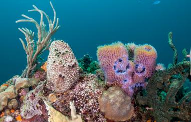 Marine Science Education Short Courses