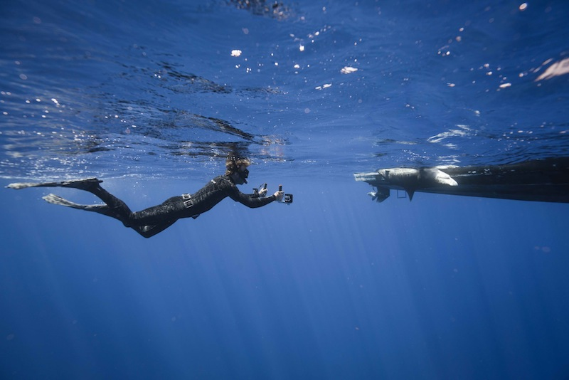 stereo-video, sharks, technology, marine science, reaserch