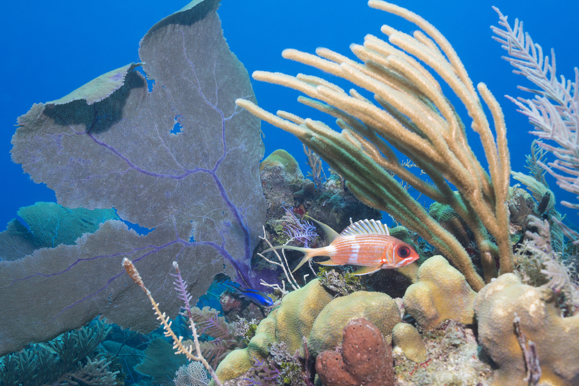 travel, Caribbean Sea, marine science, diving, snorkeling