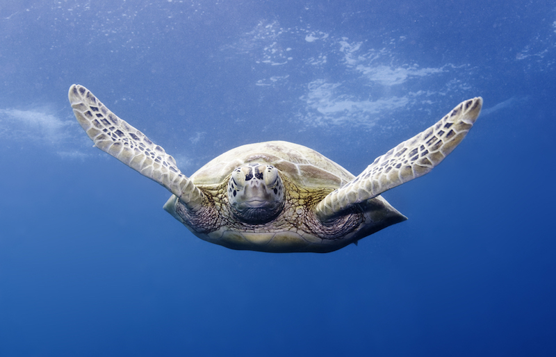 marine science, sea turtle, conservation, education, colorado