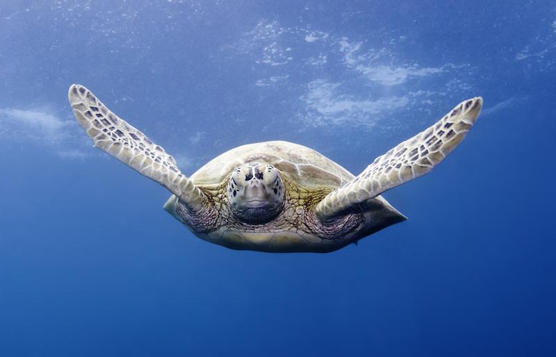 marine science, sea turtle, conservation, education, colorado