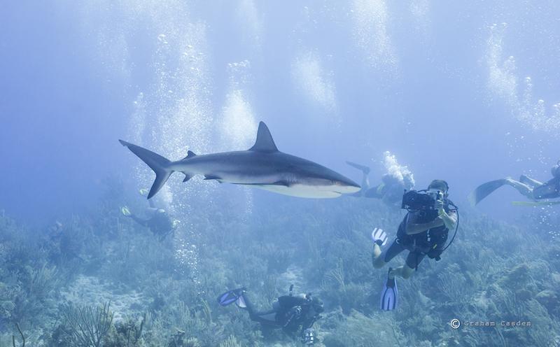 marine science, conservation, impact, education, ocean