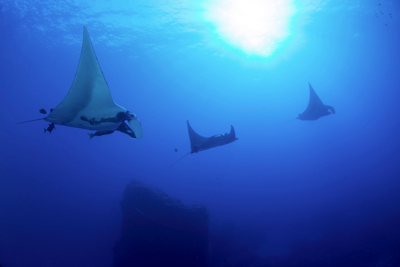 marine protected areas, MPA, conservation, education, socorro, mexico, marine science