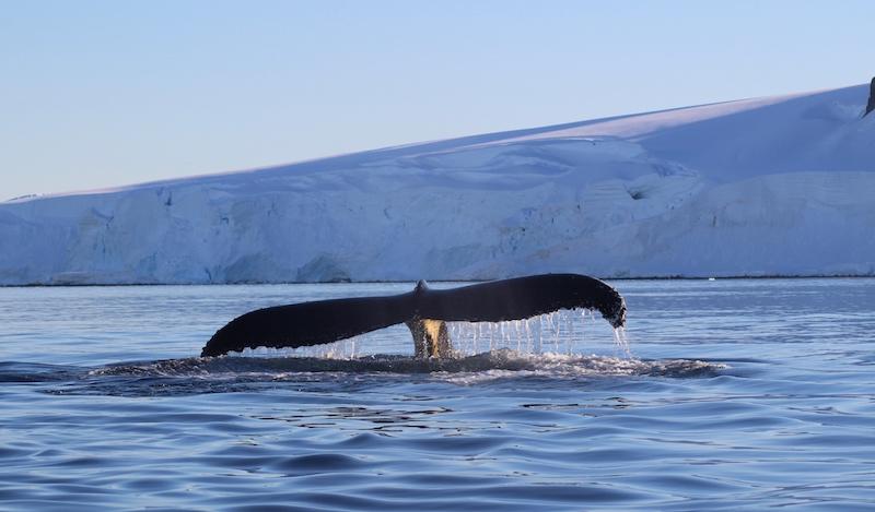 ocean, science, education, conservation, love, appreciation