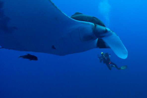 Interacting with Mantas