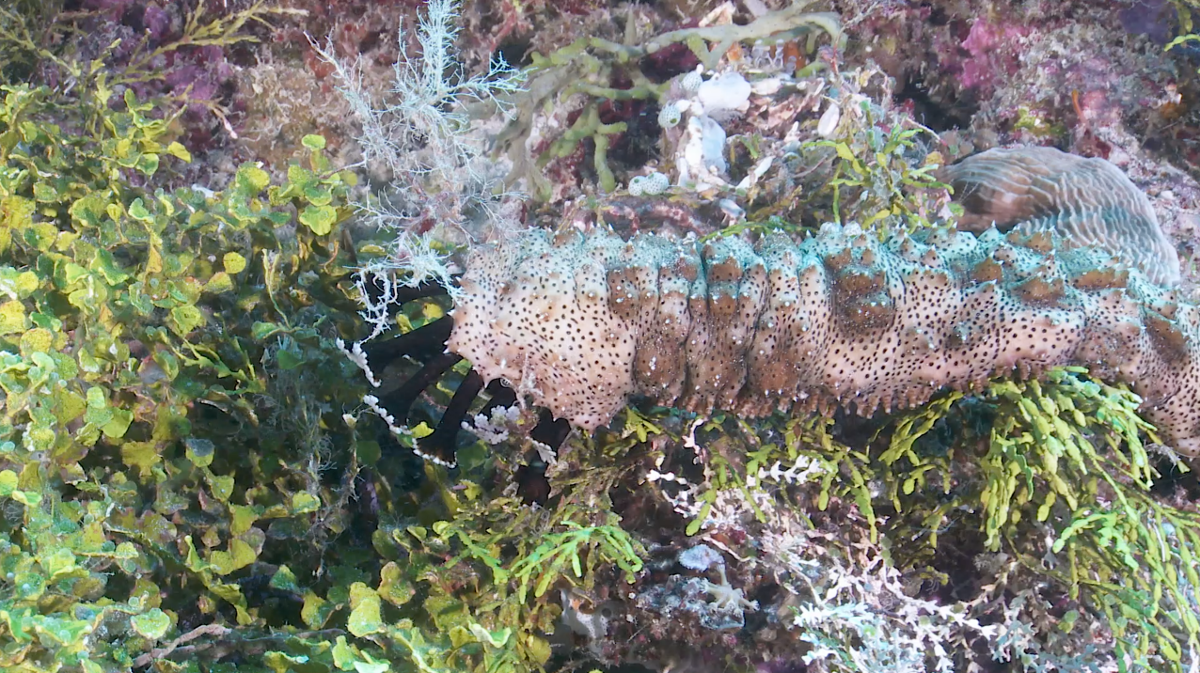 Echinoderms.png