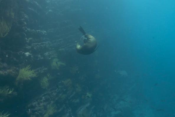 Marine Mammals - The Species