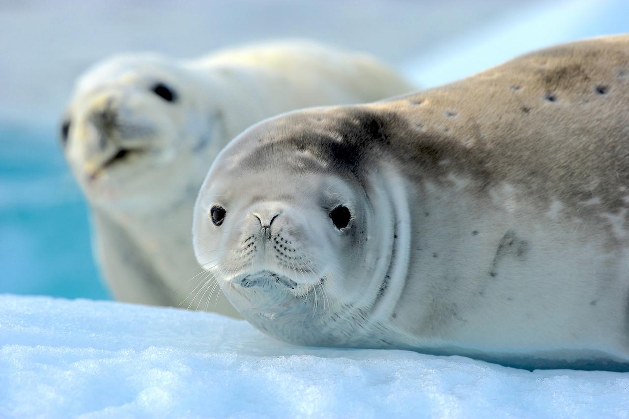 Marine Mammals: A Life Aquatic