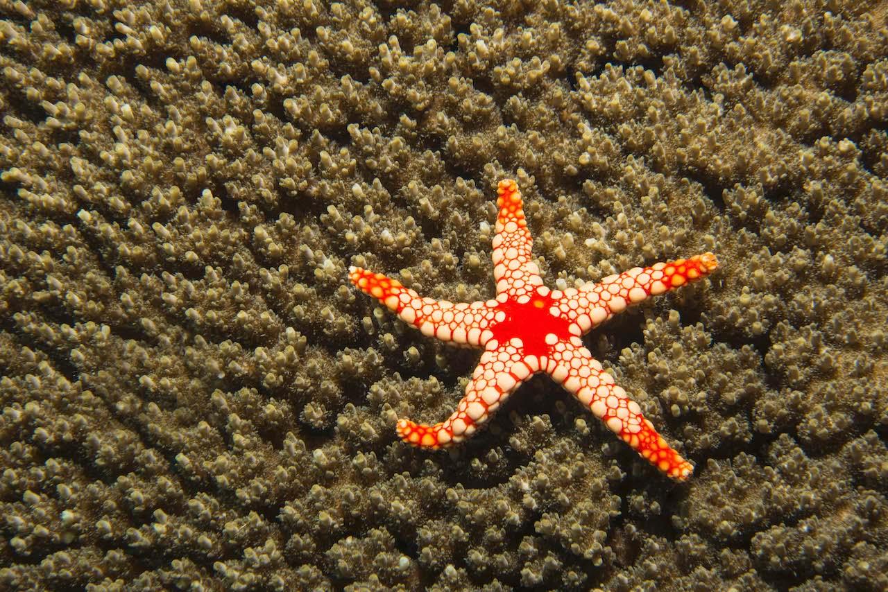 Marine Invertebrates: The Other 97%