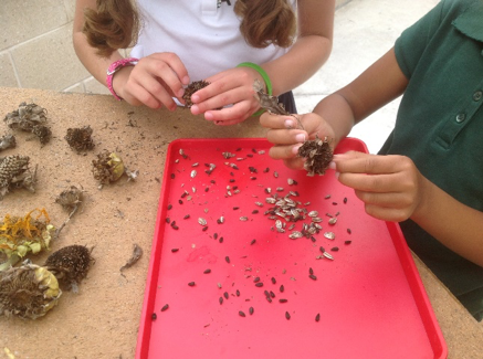 Observing and sorting seeds.