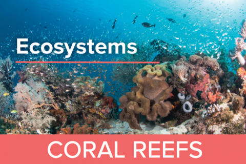 Coral Reefs - Guy Harvey Edition