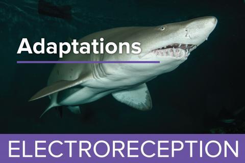 Electroreception - Guy Harvey Edition