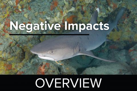 Negative Impacts Overview - Guy Harvey Edition