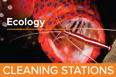Cleaning Stations - Guy Harvey Edition
