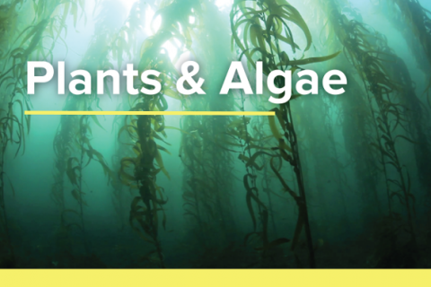 Plants & Algae