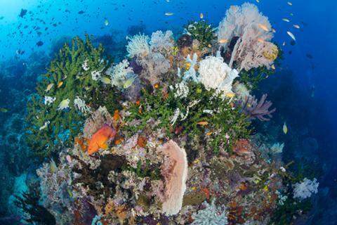 Biodiversity of the Ocean